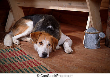 The sad dog lies under a bench in the rural house.