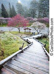 The sakura season of Taiwan