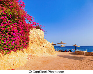 The sea and beach at Sharm El Sheikh