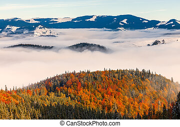 The sea of fog with forests as foreground