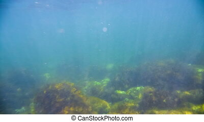 the seabed under the water - Marine life under water....