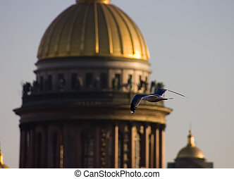 The seagull on a background of a cathedral