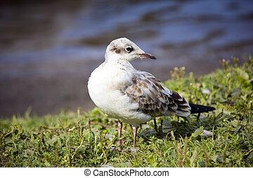 The seagull on coast