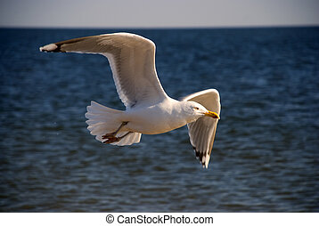 The seagull over ocean waves
