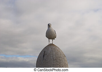 The seagull sits on a column
