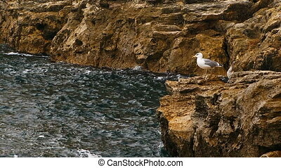 The seagull sits on a rock by the sea. - A seagull and a ...