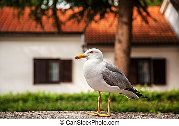 The seagull sits on a stone