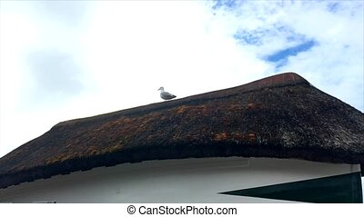 The seagull sits on a straw roof in blue sky background