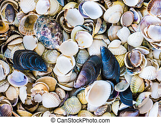 The Seashell background.