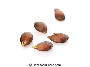 the seed apple on white background
