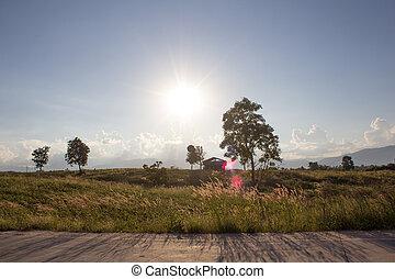 The setting sun in summer