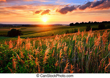 Gorgeous sunset with the sun flooding the landscape's vegetation in red and warm colors, vibrant sky and rural hills