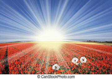 The sharp spring sun shines  buttercups