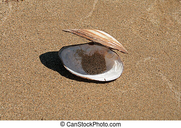 The shell on sand background at summer