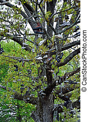 The Shoe Tree - A tree filled with old shoes is a landmark ...