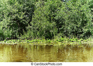 The shore of a small river overgrown with bushes and yellow water lilies