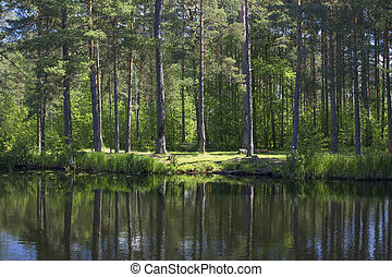 The shore of the forest lake. Reflections of trees on the water surface.