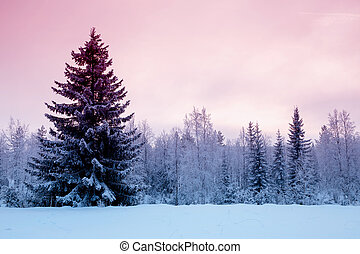 The short winter day in northern Russia. Karelia