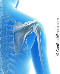 The shoulder joint - 3d rendered illustration of the...