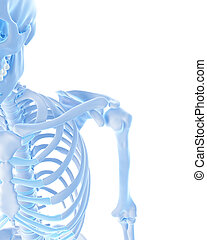 the shoulder joint - medically accurate illustration of...