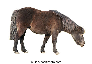 the side view of a brown pony  with fut