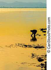 silhouette of a fisherman in the river at sunset