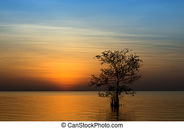 The silhouette of a tree in a lake