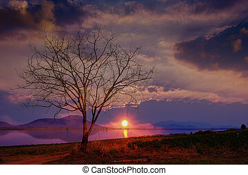 The silhouette of the tree at the sunset is a beautiful background.
