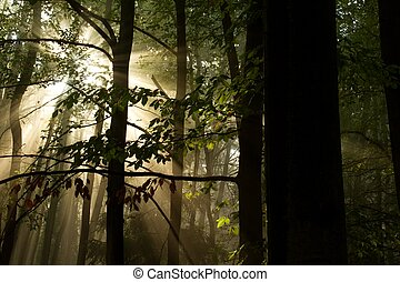 the silhouettes of the trees