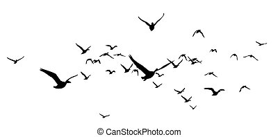 The Siluettes flocks of ducks.