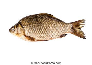 carp isolated on white