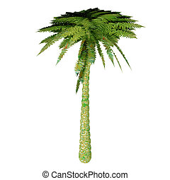 Silver Tree Fern - The Silver Tree Fern is endemic to the...