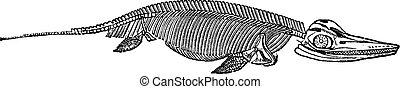 The skeleton of Ichthyosaurus vintage engraving