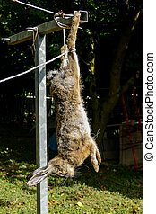 The slaughter of the animal hare Animal slaughter The death ...