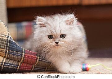 The small fluffy kitten lies