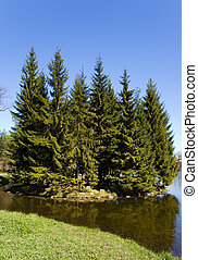 the small islet with high firs in park