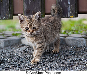 The small kitten walking on the road