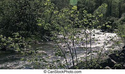 the small mountain river