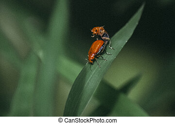 The small orange insects
