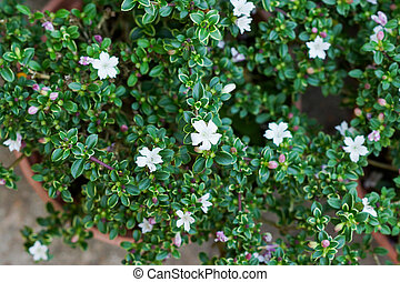The small white flowers on tree