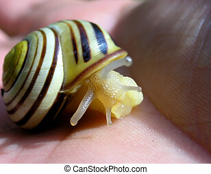 The snail.