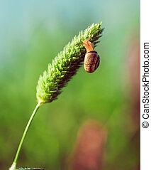 the snail closeup