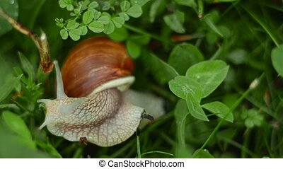 the snail crawls and eats in the grass - the cochlea crawls...