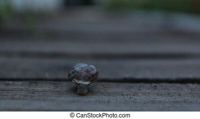 The Snail Crawls Evening - The snail crawls in the garden at...