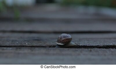 The Snail Crawls In Evening - The snail crawls in the garden...