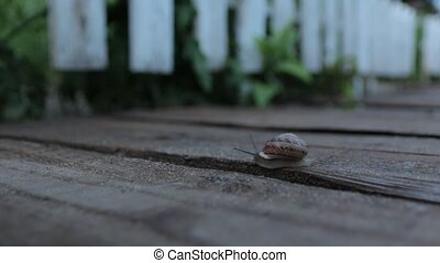 The Snail Crawls In The Evening - The snail crawls in the...