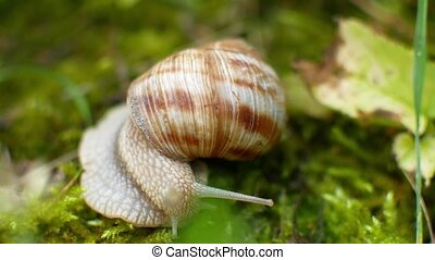 the snail crawls in the green grass