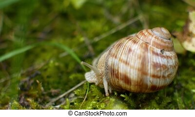 the snail crawls in the green grass.