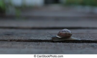The Snail Crawls Slime - The snail crawls in the garden at...