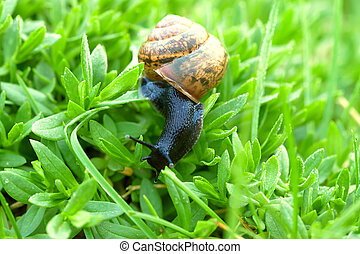 snail on green grass close up